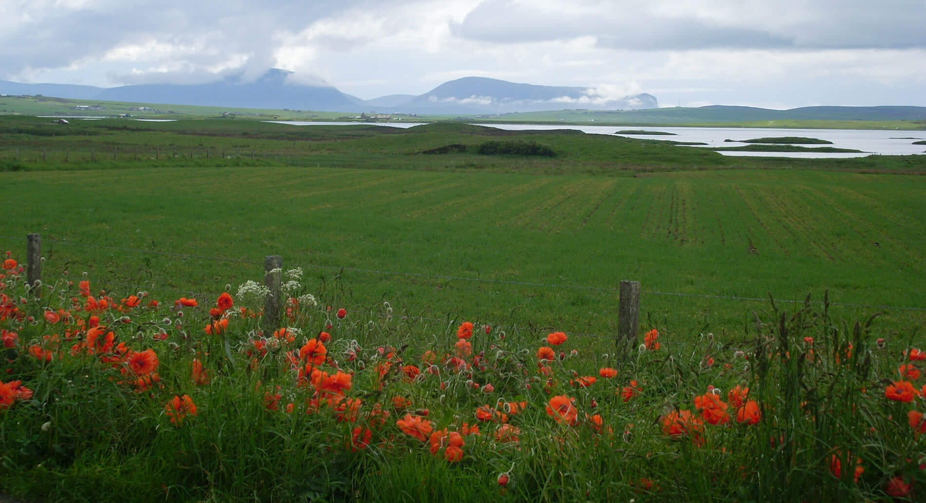 Loch of Stenness Poppies : Orcadian hospitality