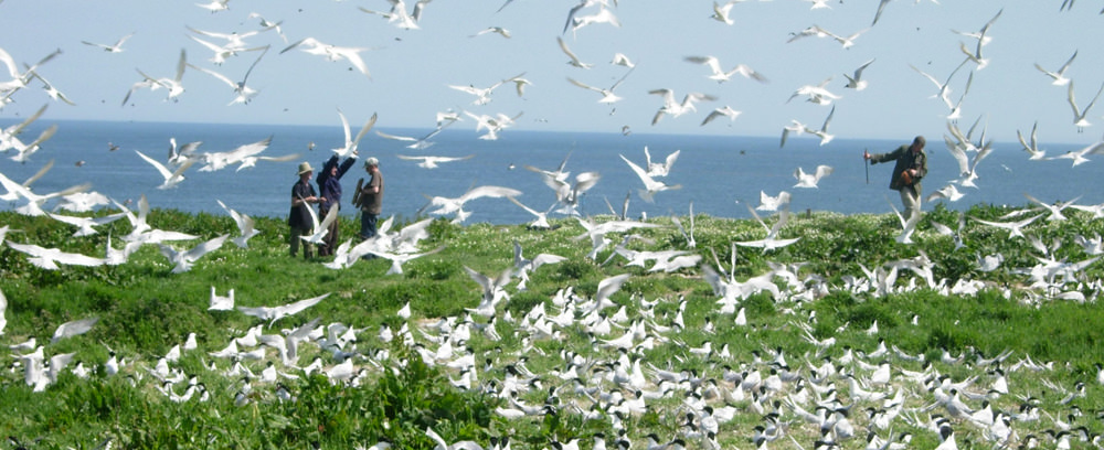 Birds at The Farne Islands, Northumberland