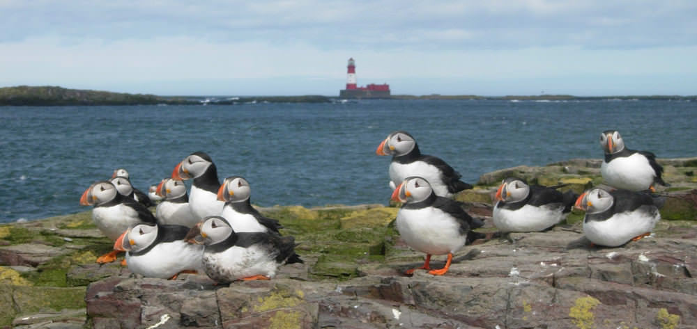 The Farne Island Northumberland Coast