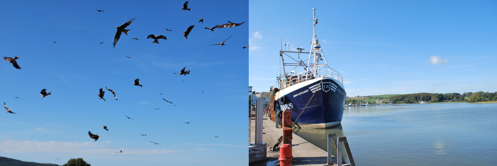 Scallop boat in Kirkcudbright harbour and Red Kite in Dumfries and Galloway