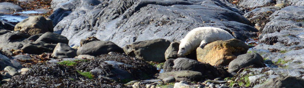 Seal Pup on our self catering Pembrokeshire holiday