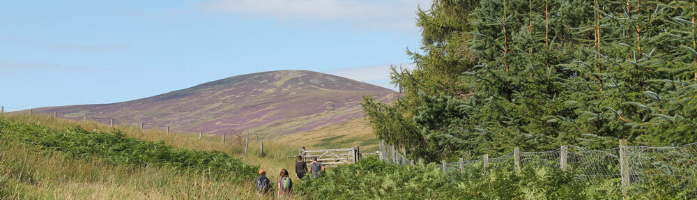 the pennine way through the cheviots