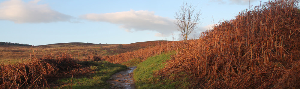 Wainwright's Coast to Coast walk crosses the North York Moors near Cote Ghyll Mill Hostel