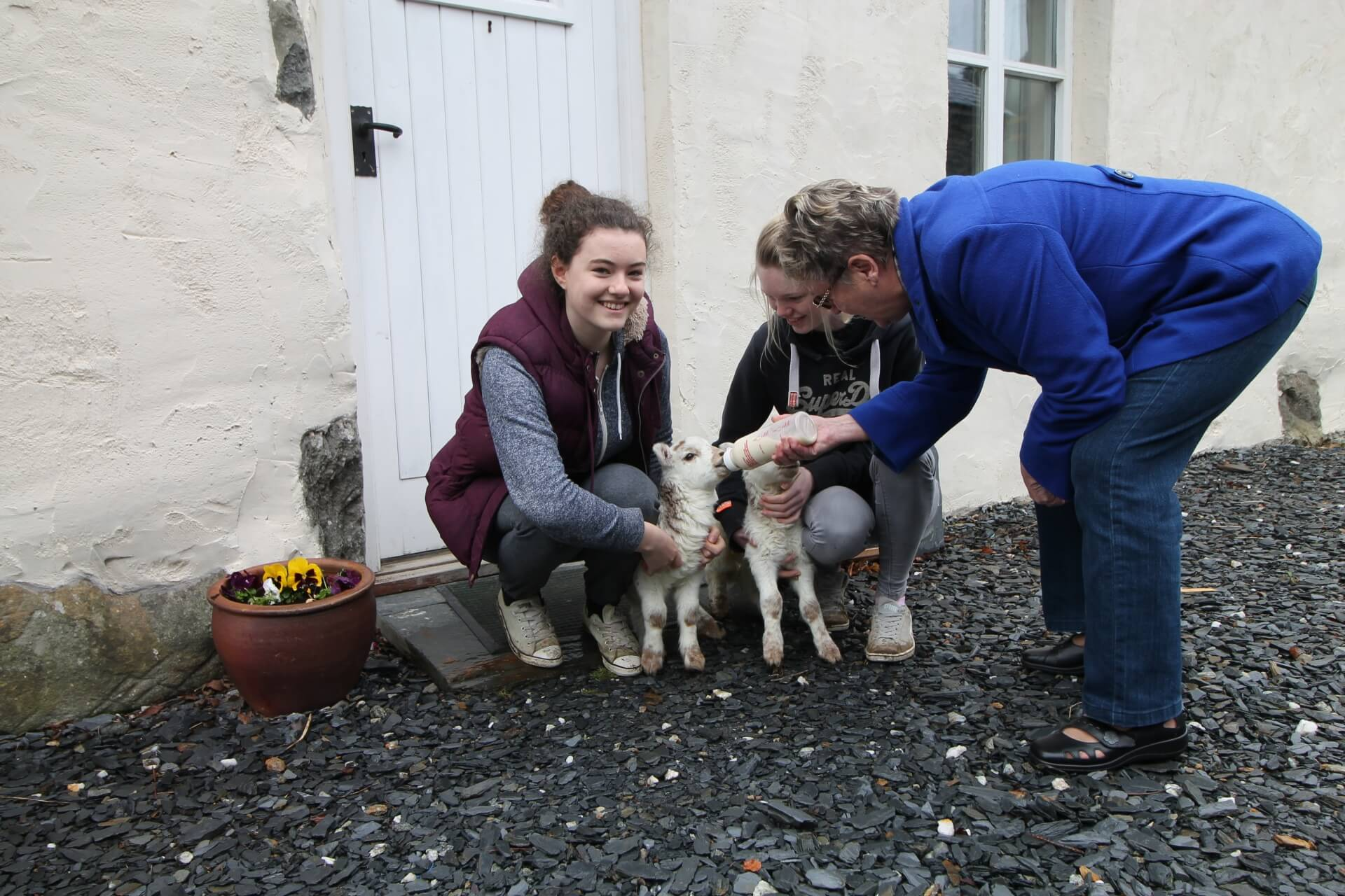 Spring Holiday in Snowdonia with lambs