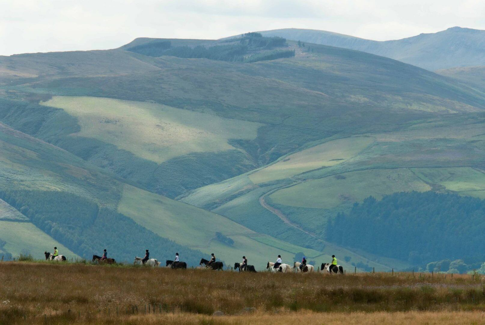 Springhill horse riding