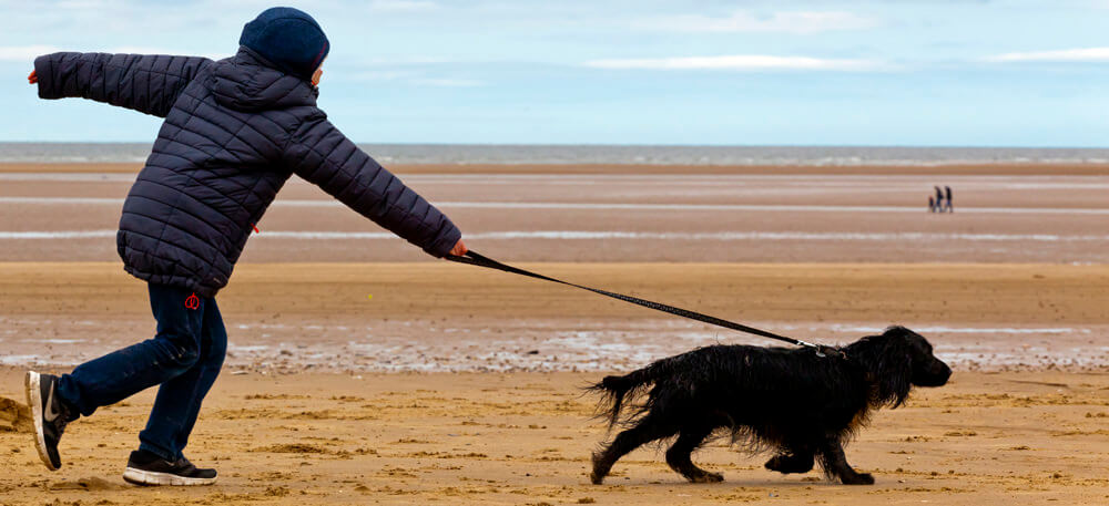 Dog Walking on the North Norfolk Coast