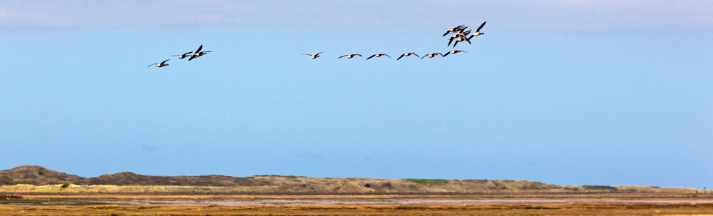 Birds over Deepdale on the North Norfolk Coast