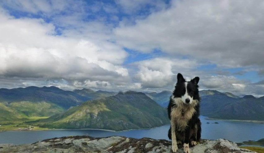 knoydart dog friendly