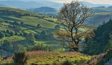 accommodarion on offas dyke