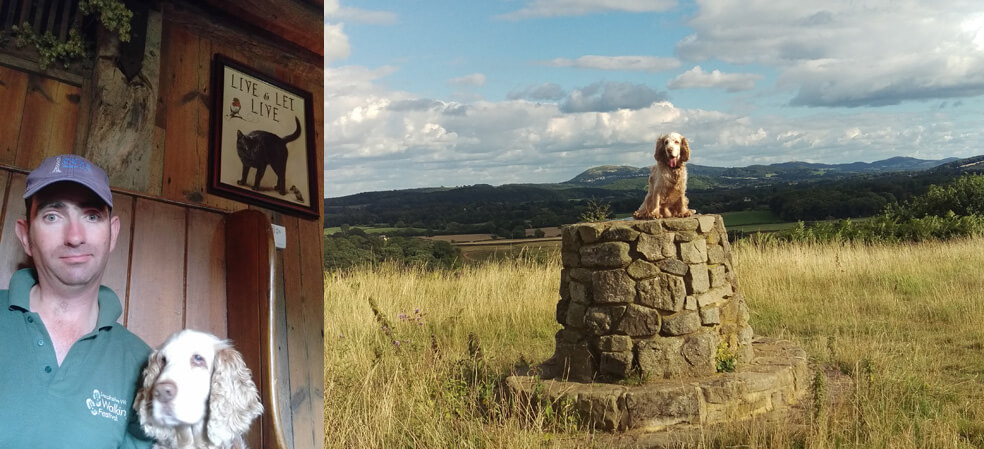 dog friendly holiday on Bringsty Common