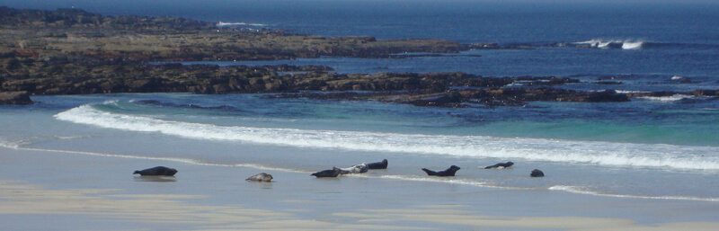 Seals on Isle of Sanday Orkney