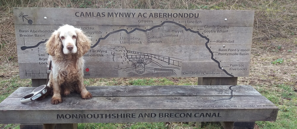 Monmouthshire and brecon canal by star bunkhouse dog friendly accommodation