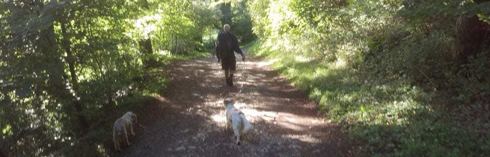 Dave and the dogs in Cumbria