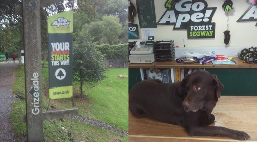 The dog on reception at Go Ape in Grizedale