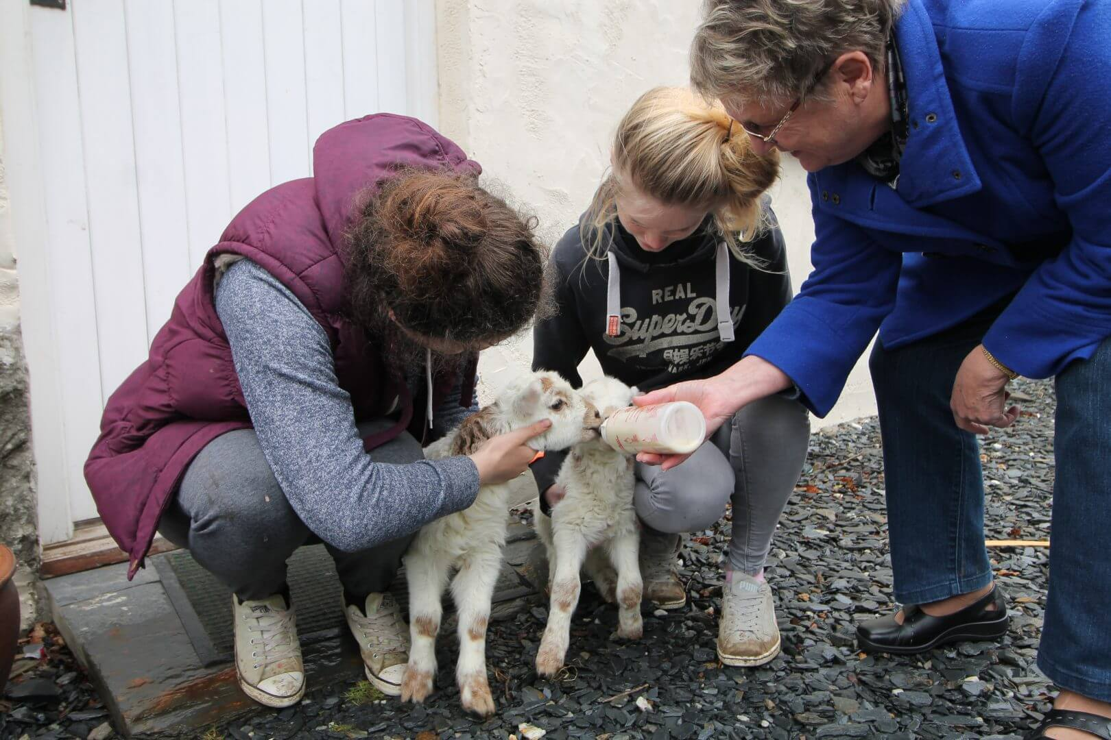 Experience agriculture at Maentwrong Bunkhouse in Snowdonia - a true Welsh farming expereince