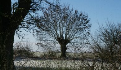 Winter tree at Old Brooder Bunkhouse