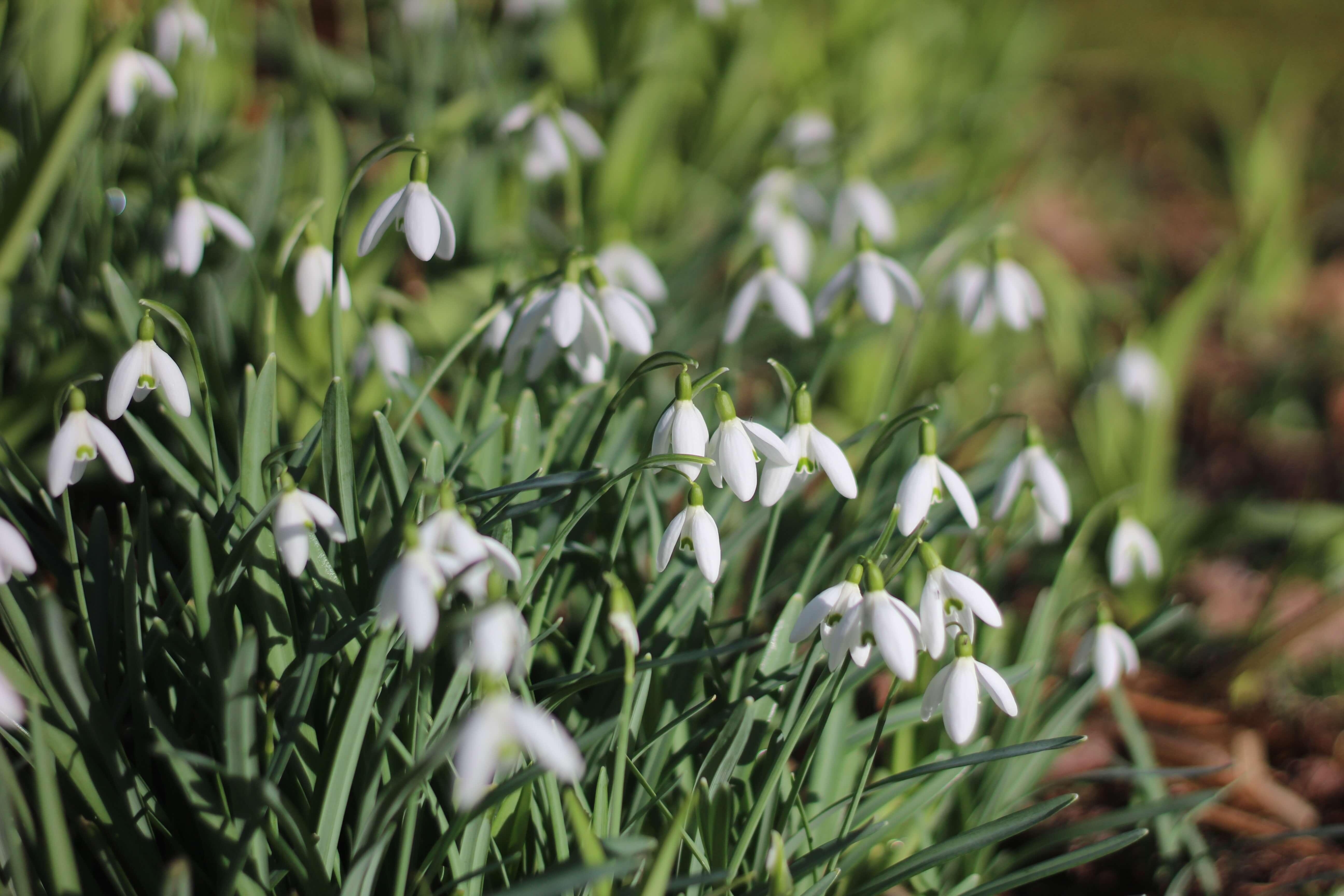 Spring at Plas Dolau