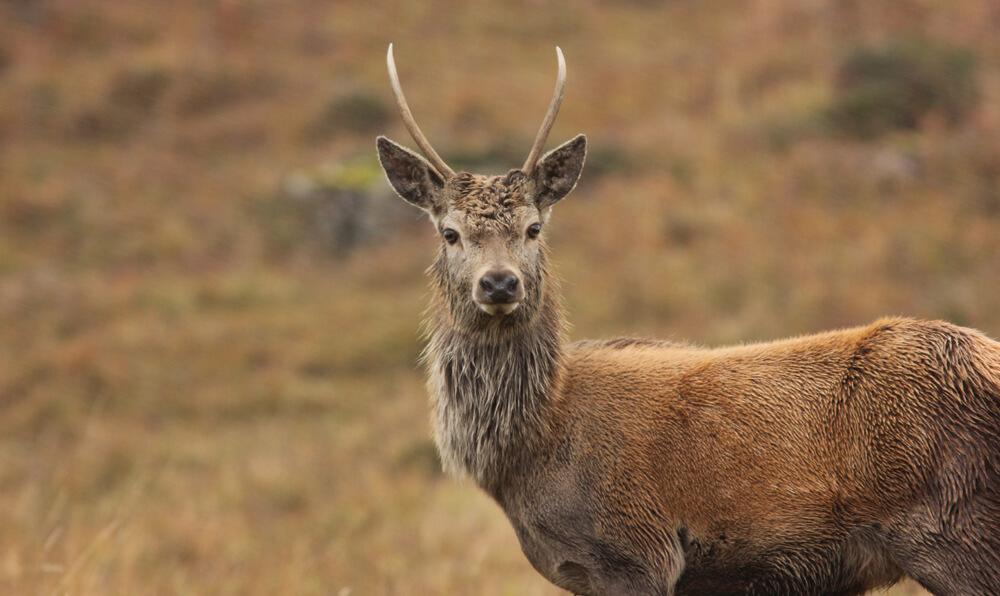 Wildlife on the Isle of Mull
