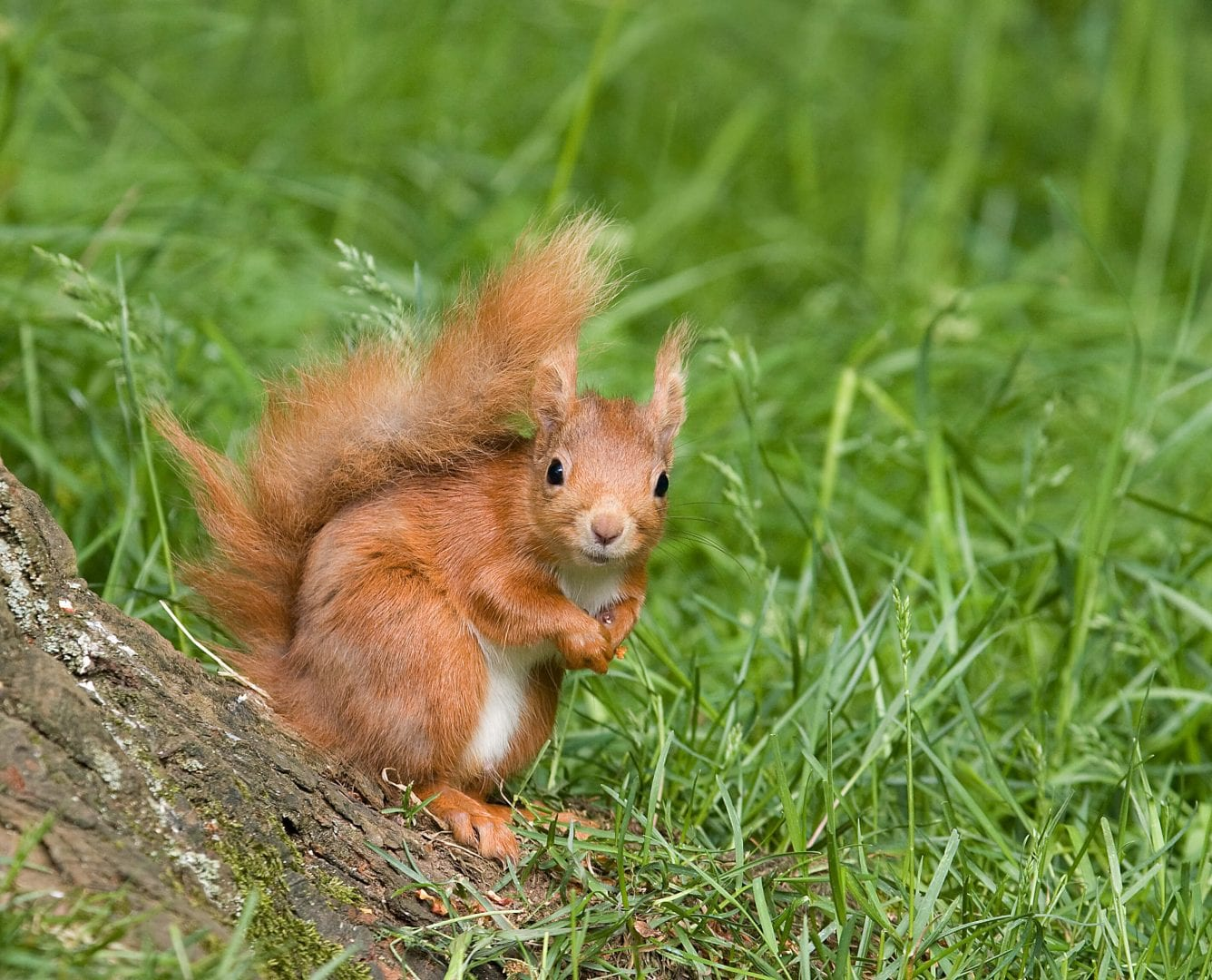 Kindrogan Field Study Centre - Scottish Highlands - red squirrels
