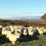 Castle Creavie Hay Barn Hostel - Dumfries and Galloway