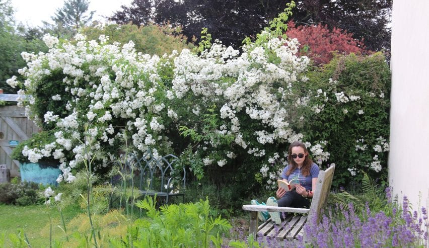 Relaxing among roses & lavender in the garden at historic Tudor Barn Hostel at Milden Hall, nr Lavenham, Suffolk