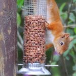 Red squirrel at Forest Way Bunkhouse