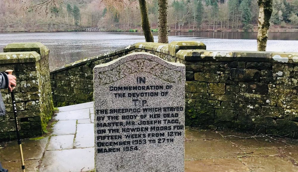 memorial to Tip the brave Collie