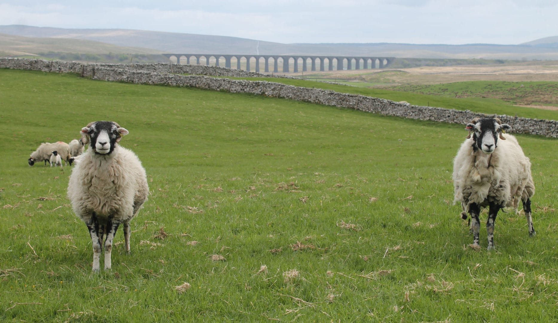 The view from Broadrake Bunkbarn of Ribblehead Viaduct on the Yorkshire Three Peaks