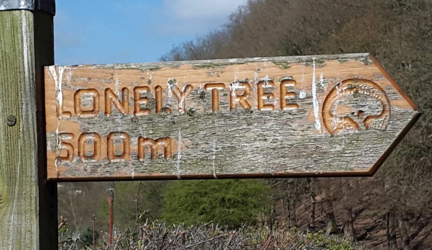Llanfyllin lonely tree sign close to llanfyllin Workhouse Bunkhouse