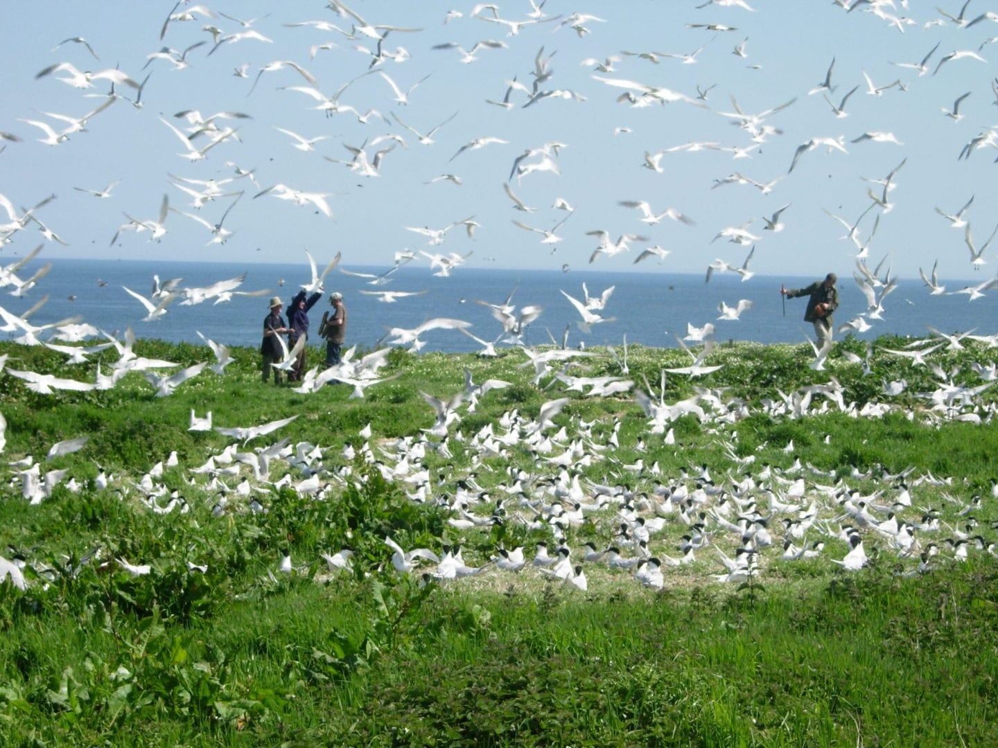 Birds at The Farne Islands - The Hides Seahouses