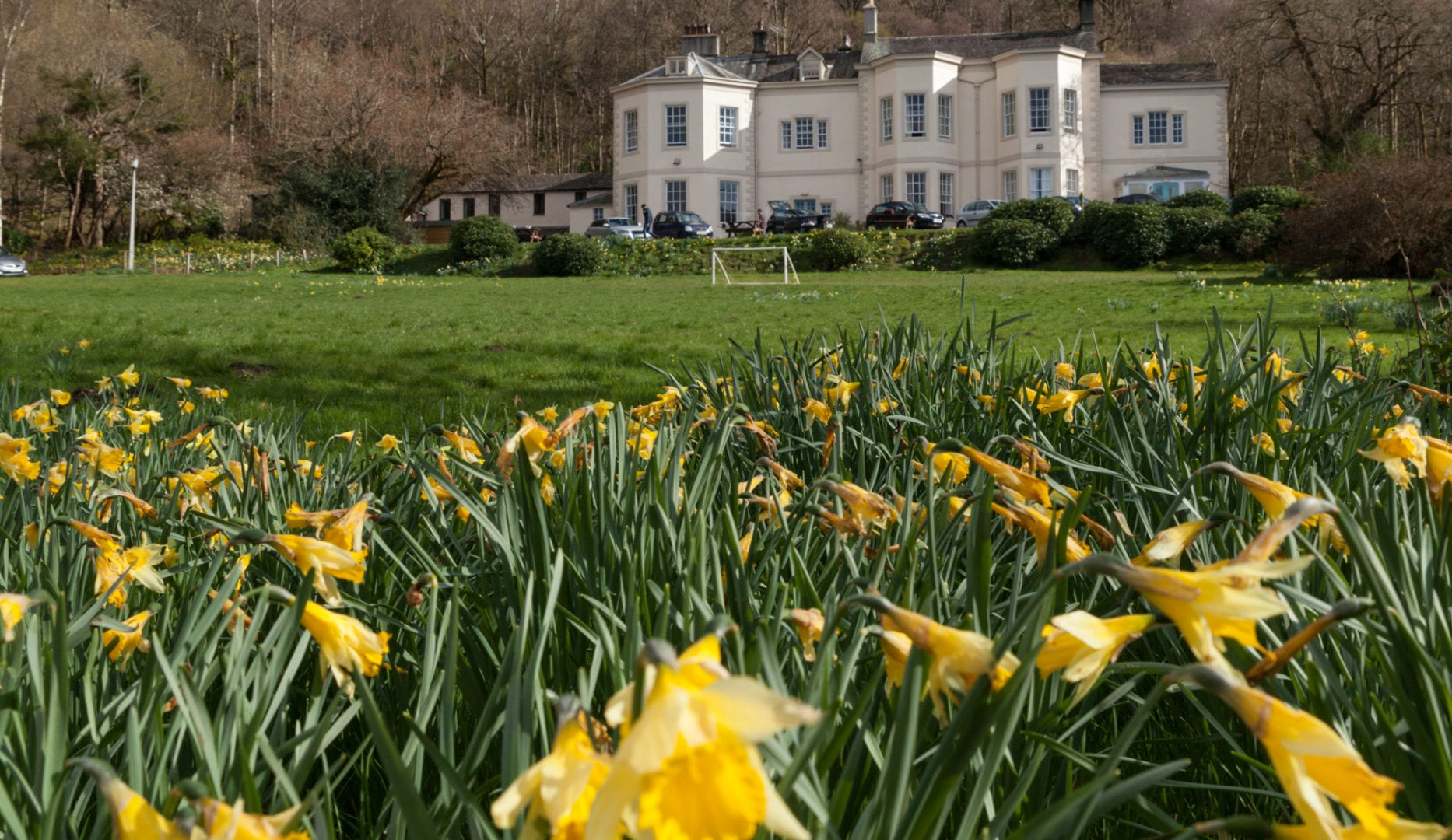Daffodils at easter at Derwentwater Hostel accommodation