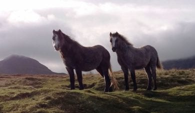 Clyngwyn Bunkhouse - horse friendly accommodation - Brecon Beacons