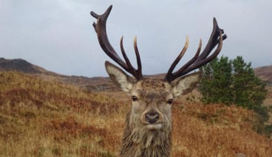 Autumn rut at The Ardnamurchan Bunkhouse