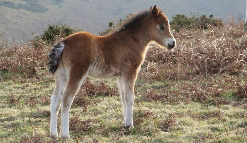wild pony on the long mynd by All Stretton Bunkhouse