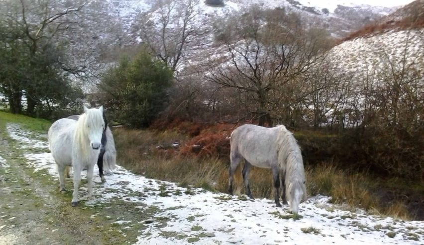 horses on the long mynd near All Stretton