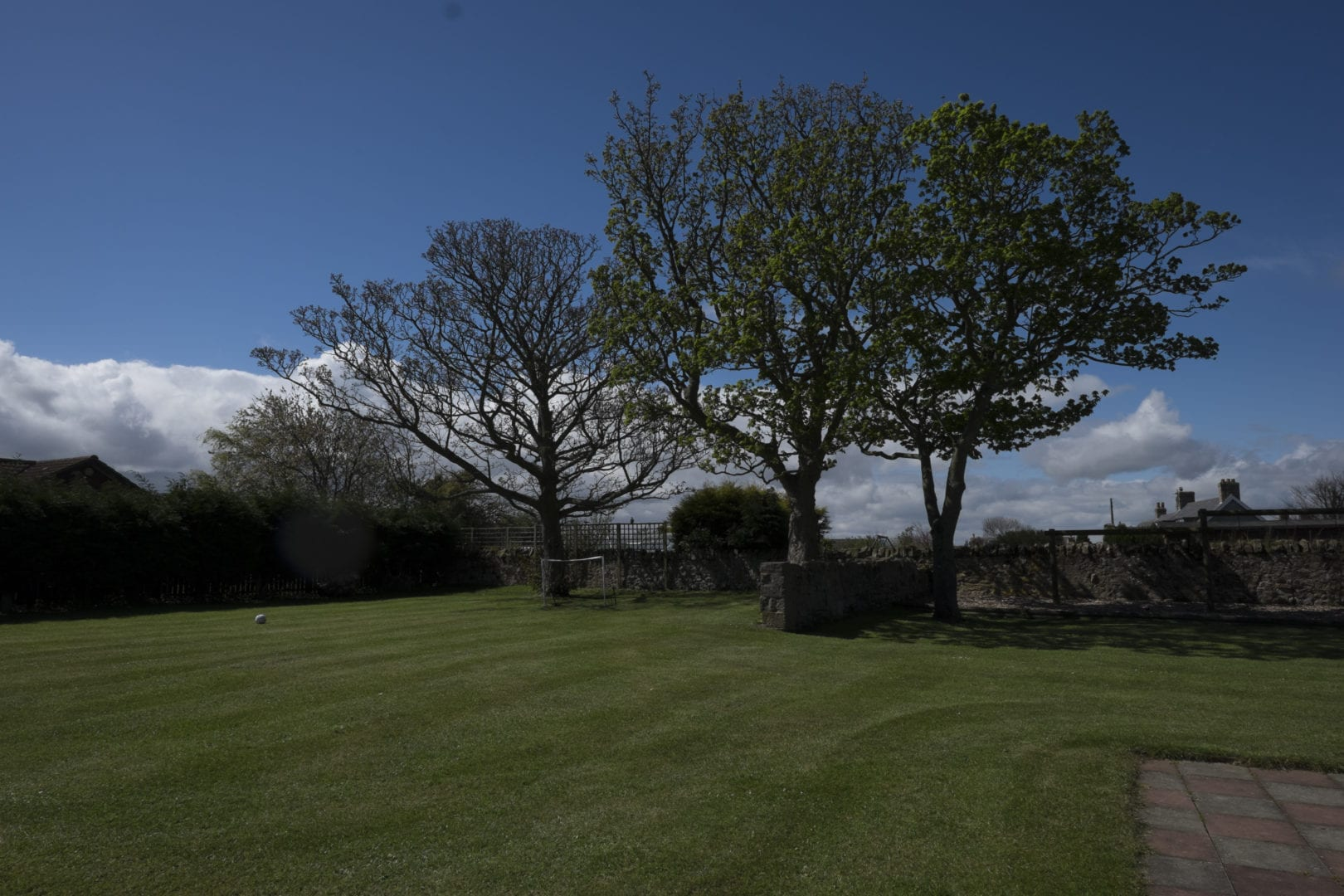 Tree in Seahouses
