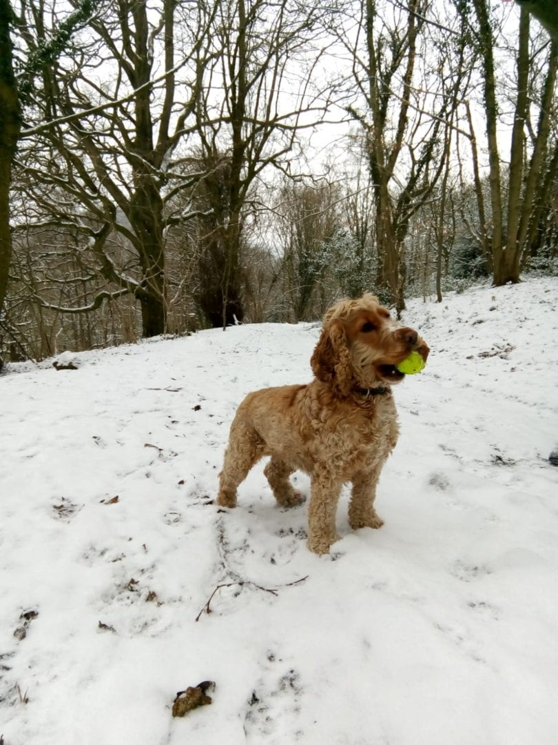 Tilly in snow
