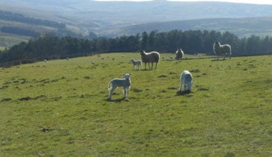 Alston YHA Sheep Isaacs tea trail