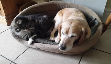 Cat and dog side by side