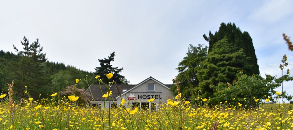 Exterior with buttercups