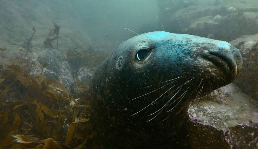 Diving in Seahouses