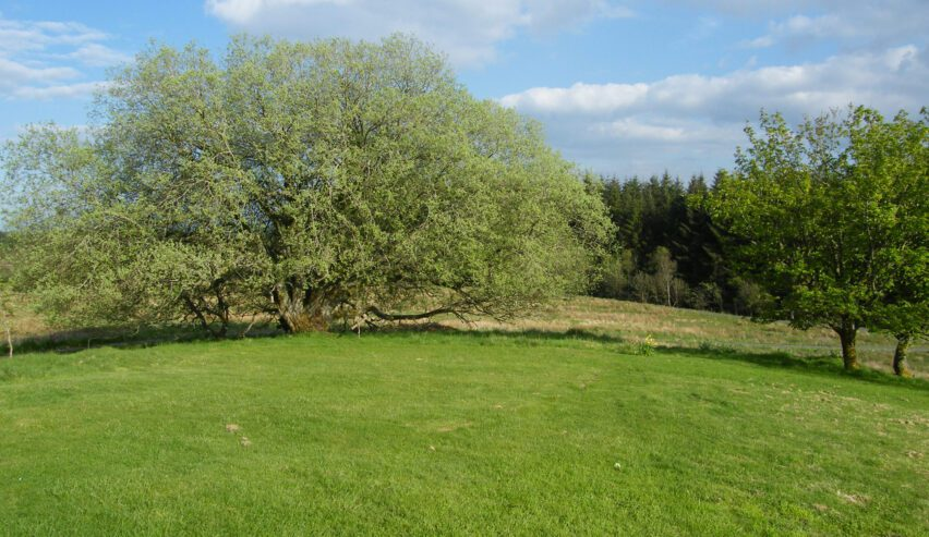 garden at Chartners Farm off grid accommodation